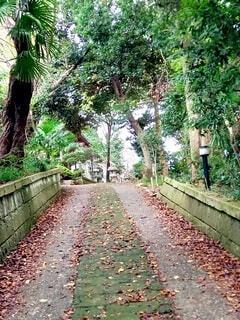 秋の散歩道の写真・画像素材[3805824]