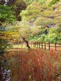 秋の緑地の写真・画像素材[3805829]