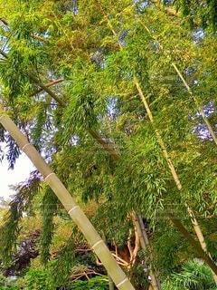 竹林の秋の写真・画像素材[3805828]