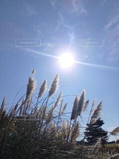 太陽の下で。の写真・画像素材[3827965]