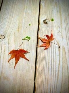 落ち葉の写真・画像素材[3776723]