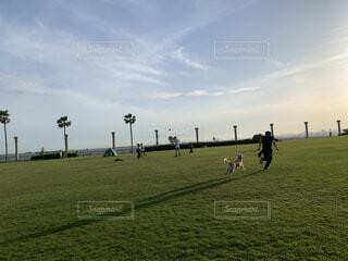 愛犬との時間の写真・画像素材[3752916]