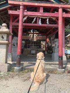 お参りする犬の写真・画像素材[3756027]