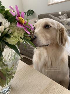 お花クンクンの写真・画像素材[3756105]