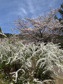 春爛漫の写真・画像素材[4288394]