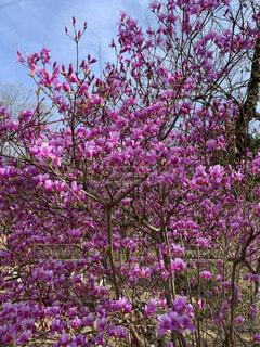 紫色の花で満たされた花瓶の写真・画像素材[4288440]