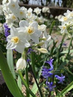 春の花の写真・画像素材[4333994]
