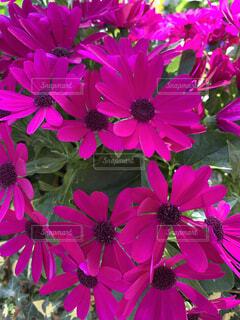 鮮やかな花の写真・画像素材[4333991]