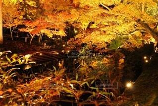 岩屋堂公園ライトアップの写真・画像素材[3748403]