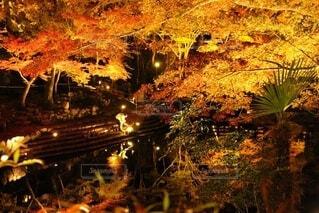 岩屋堂公園ライトアップの写真・画像素材[3748402]