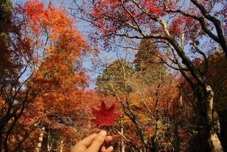 秋の醍醐味の写真・画像素材[3748400]