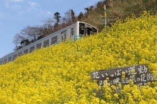 花いっぱいの写真・画像素材[3750783]