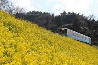 花畑の中を走る電車の写真・画像素材[3750797]