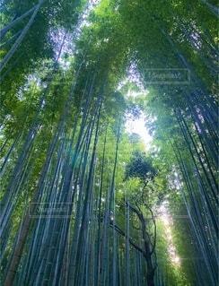 竹林を見上げての写真・画像素材[3757571]