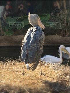 干し草の山の上に立っている鳥の写真・画像素材[3797935]