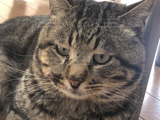 猫のクローズアップの写真・画像素材[3754481]
