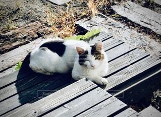 近所の猫の写真・画像素材[3979417]