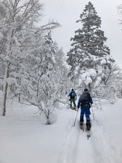 自然,風景,冬,雪,屋外,歩く,樹木,人,スキー,運動,冬山,ウィンタースポーツ,バックカントリースキー