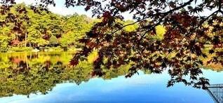 修法ヶ池の写真・画像素材[3853873]