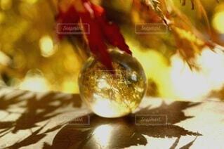 紅葉,ガラス,ガラス玉,飾り,エモい,エモい写真
