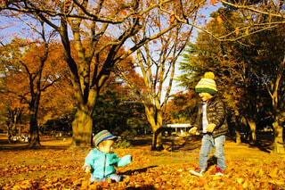秋の公園の写真・画像素材[3748070]