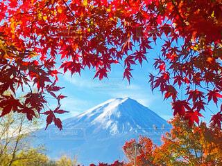 紅葉と富士山の写真・画像素材[3861279]