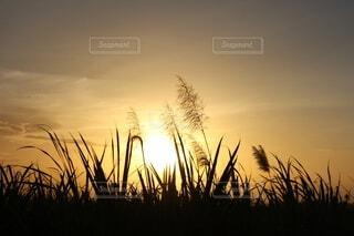 夕焼けの写真・画像素材[3752979]