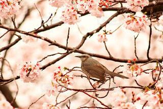 木の枝に止まっている小鳥の写真・画像素材[3764243]