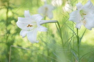 花のクローズアップの写真・画像素材[3751687]
