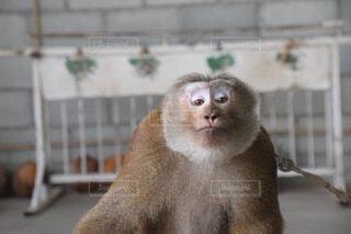猿の写真・画像素材[3751716]