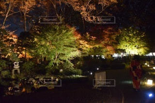夜の紅葉の写真・画像素材[3751727]