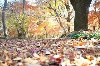 紅葉と落ち葉との写真・画像素材[3751747]