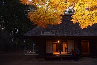 家の前の木の写真・画像素材[3753651]