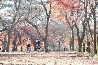 秋の写真・画像素材[3753650]