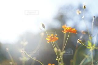 光に滲む花の写真・画像素材[3817682]