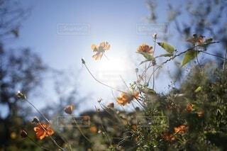光を浴びての写真・画像素材[3817683]