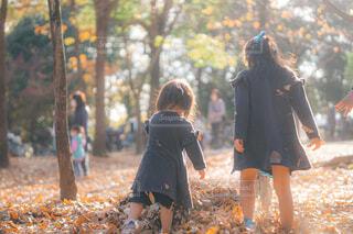 葉っぱで遊ぼう!の写真・画像素材[3919431]