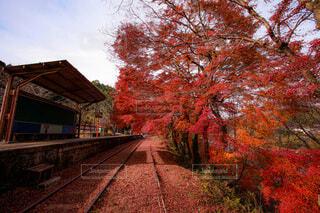 背景に木がある電車の線路上の電車の写真・画像素材[3755825]