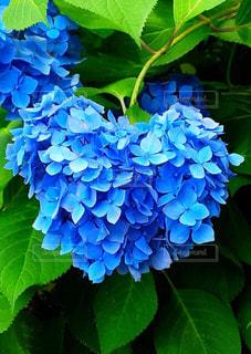 花の写真・画像素材[199332]
