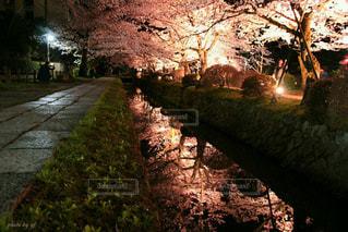 春 - No.403083