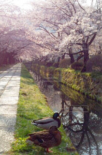 春の写真・画像素材[403108]