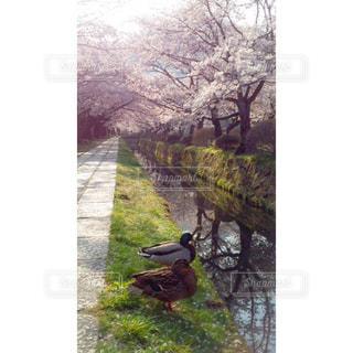 春の写真・画像素材[403114]