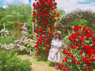 お花畑 - No.554865