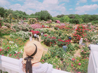 近くのフラワー ガーデンの写真・画像素材[712092]