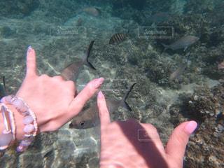 魚を持っている手 - No.745674