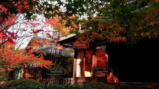 家の前に木の写真・画像素材[761093]