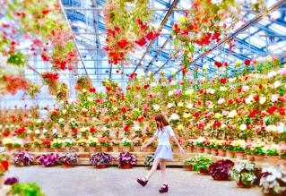 色とりどりの花のグループ - No.770434