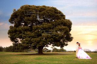 背景の木と緑のフィールドの人 - No.788253