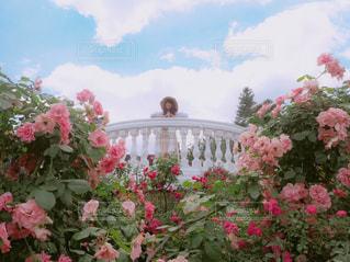 庭にピンクの花で一杯の花瓶の写真・画像素材[843753]