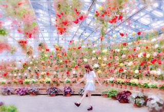 近くの花のアップ - No.888405